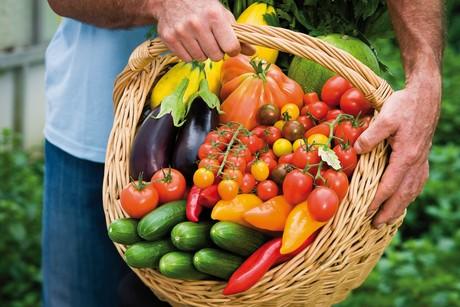 Video über den Gemüseanbau