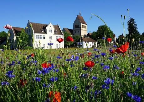 Münster mit Fuggerhaus und Blumenwiese