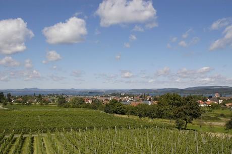Blick von der Hochwart über die Reben auf den Hegau, Reichenau