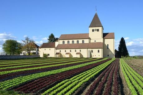 Kirche St. Georg mit Salatfeld, Reichenau